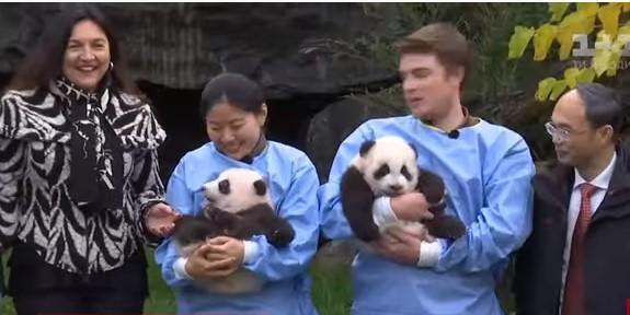 Поздравить панд приехал и посол Китая / скриншот видео ТСН