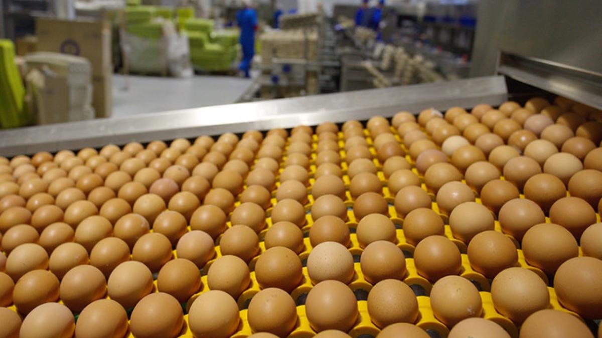 """Агрохолдинг """"Авангард"""" является крупнейшим производителем куриных яиц в Украине / uprom.info"""