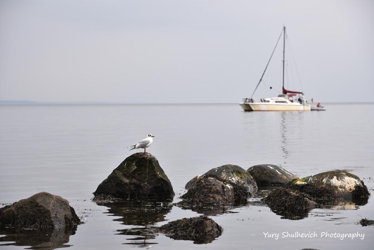 На Балтійському морі найтепліше зазвичай у серпні / фото Yury Shulhevich
