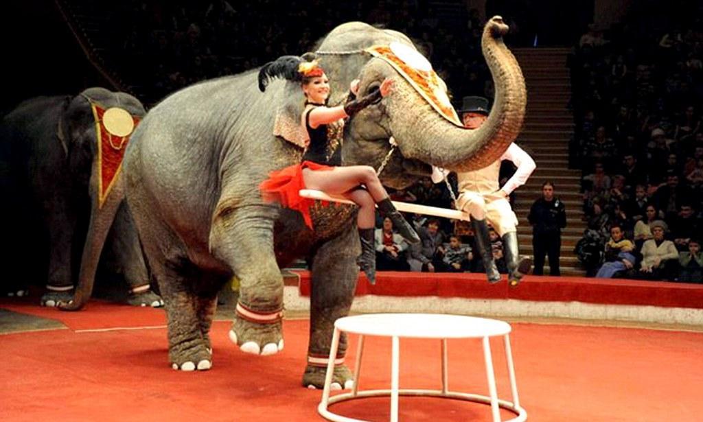 Со следующего года передвижные цирки в Париже будут без животных / фото: dailymail.co.ru