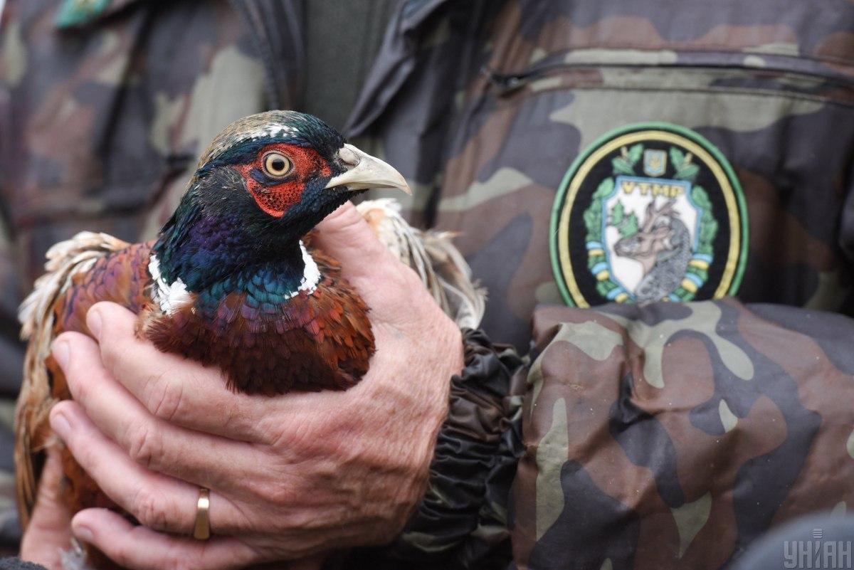 Михаил Поковба мечтал разводить птиц еще с 90-х/ фото УНИАН