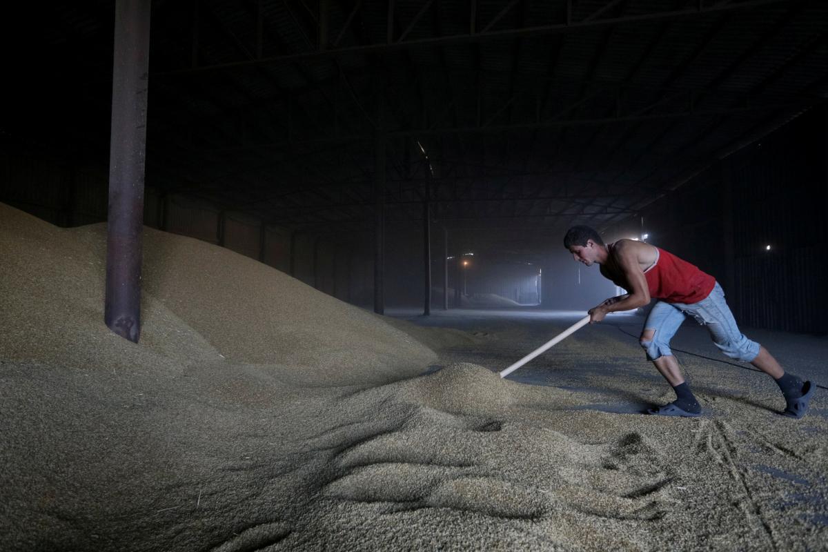 Ограничений экспорта зерновых и масличных не будет / Иллюстрация REUTERS