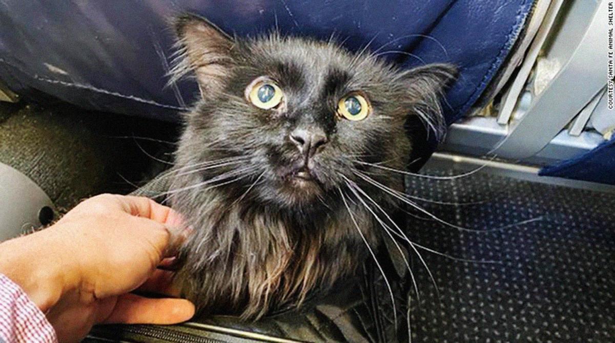 Кота уже вернули владельцам / фото Santa Fe Animal Shelter