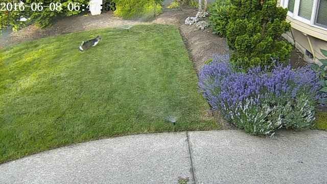 Кадр с камеры видеонаблюдения возле дома инженера / скриншот