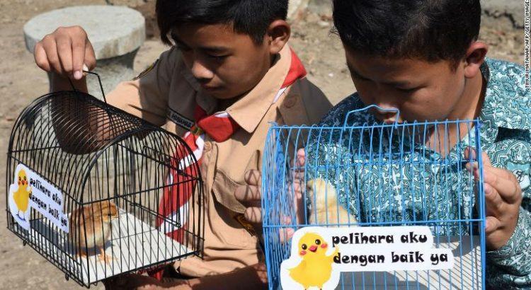 Индонезийские школьники смотрят на птенцов в клетках с табличками, на которых написано «Пожалуйста, хорошо позаботься обо мне» / фото CNN