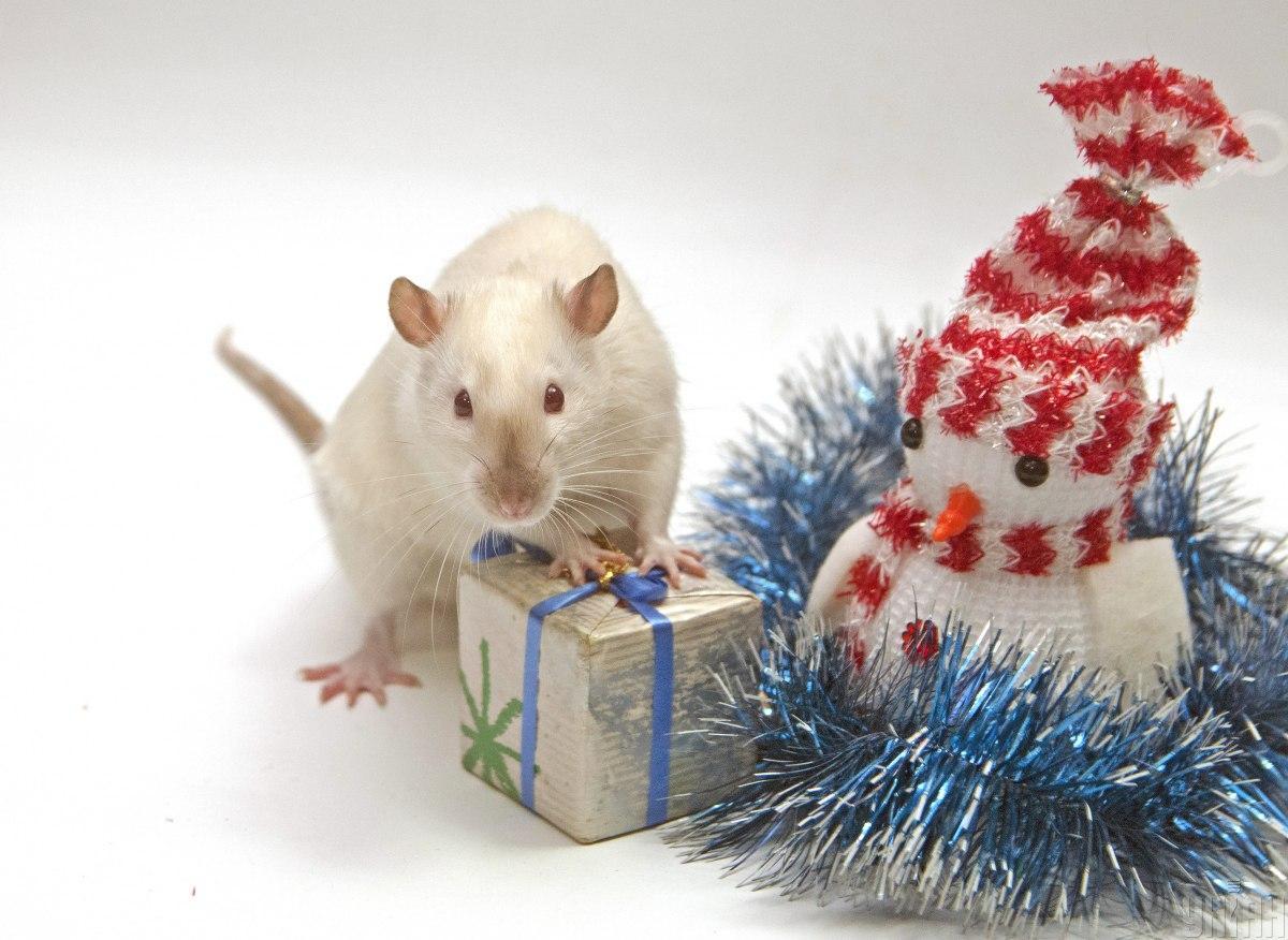 Что нас ждет в год Крысы / Фото УНИАН
