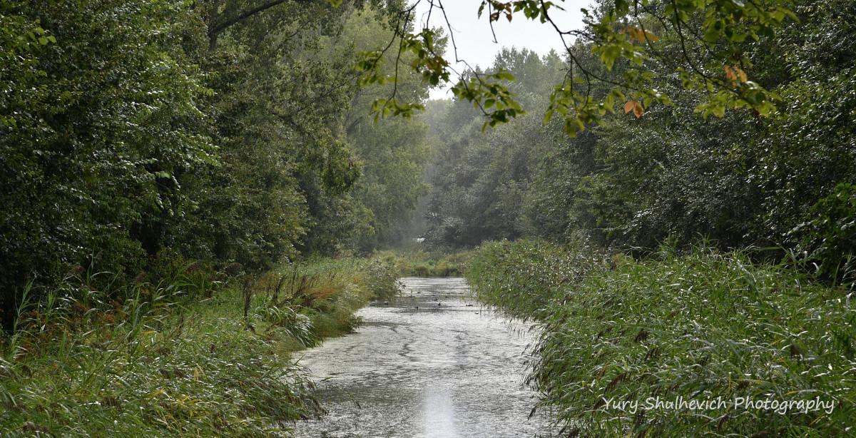 Голландці не бояться дощу / фото Yury Shulhevich
