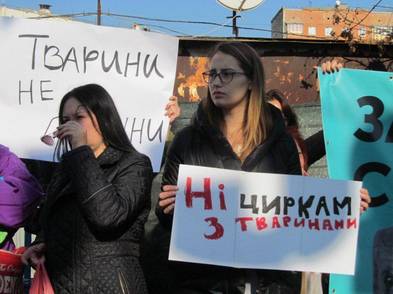 С инициативой о запрете цирков в городе выступили зоозащитники / фото УНИАН