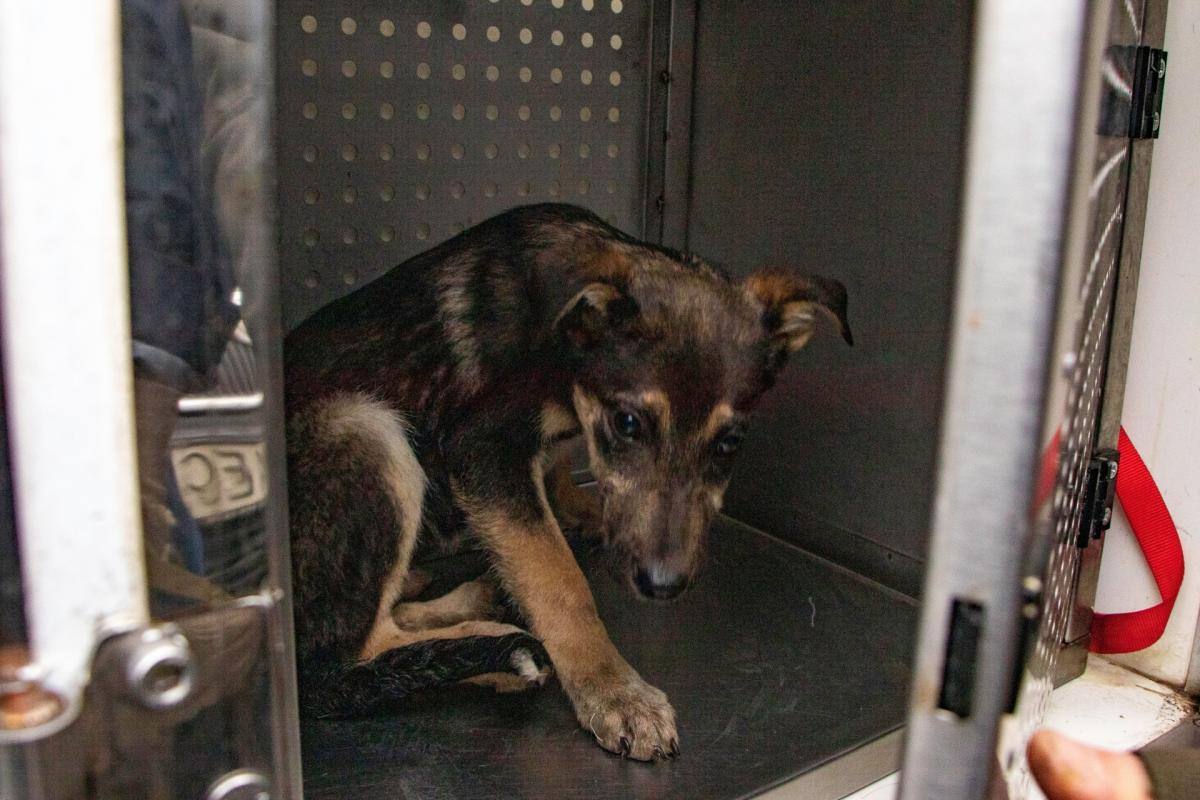 Волонтеры взяли обязательство пристроить животных / фото «Зооконтроль»