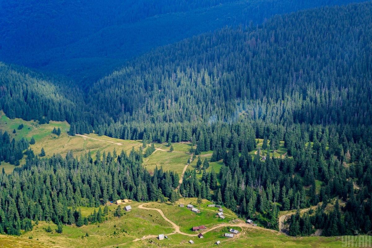 Количество вырубок леса в Украине значительно возросло / Фото УНИАН