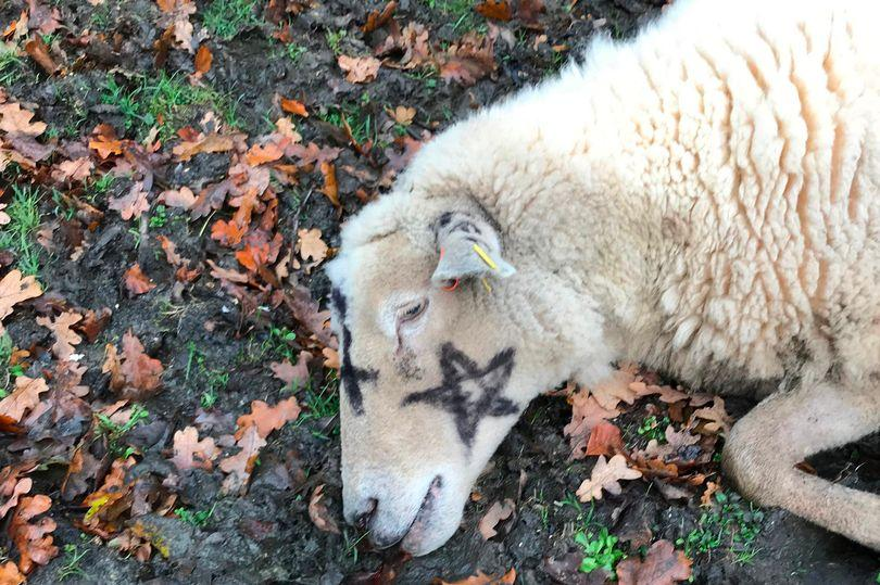 За «сатанинскими убийствами» может стоять один из фермеров/ фото: The Mirror