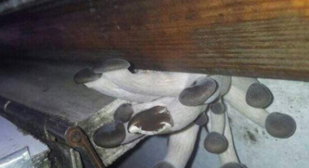 """""""Чтобы трип был незабываемым"""": в сети обсуждают фото с растущими в вагоне УЗ грибами"""