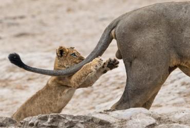 Назване найсмішніше фото дикої природи 2019 року