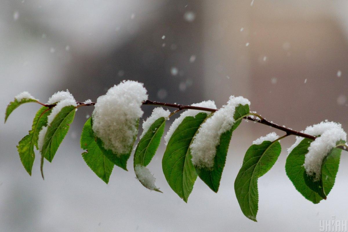 У Києві в середу йтиме мокрий сніг / УНІАН