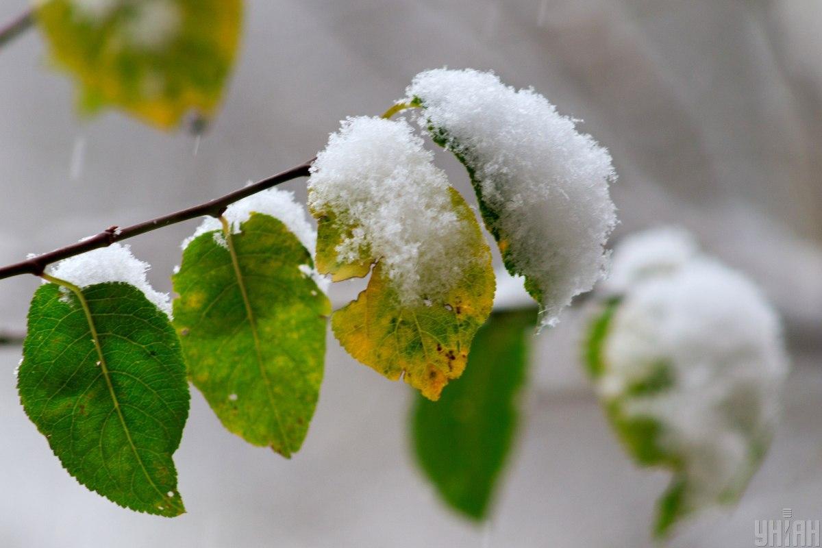 Мокрий сніг може піти вже наприкінці жовтня / фото УНІАН