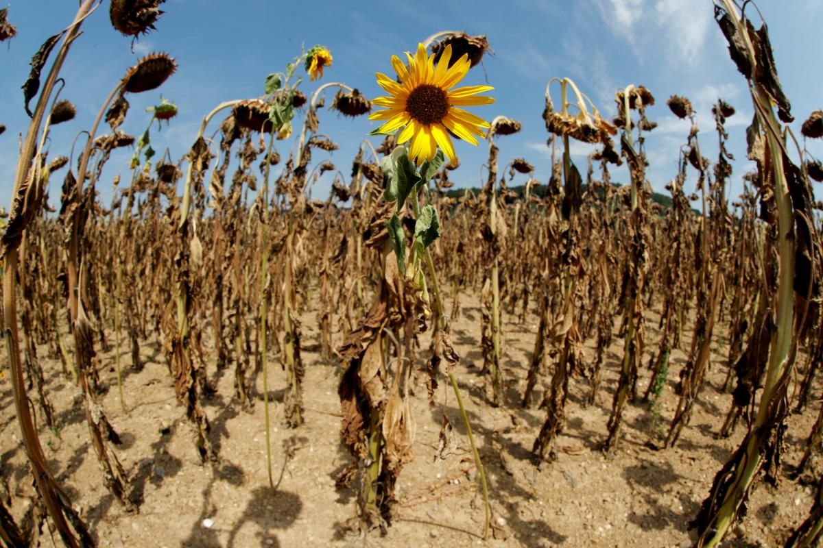 Украина может превратиться в пустыню / иллюстрация / REUTERS