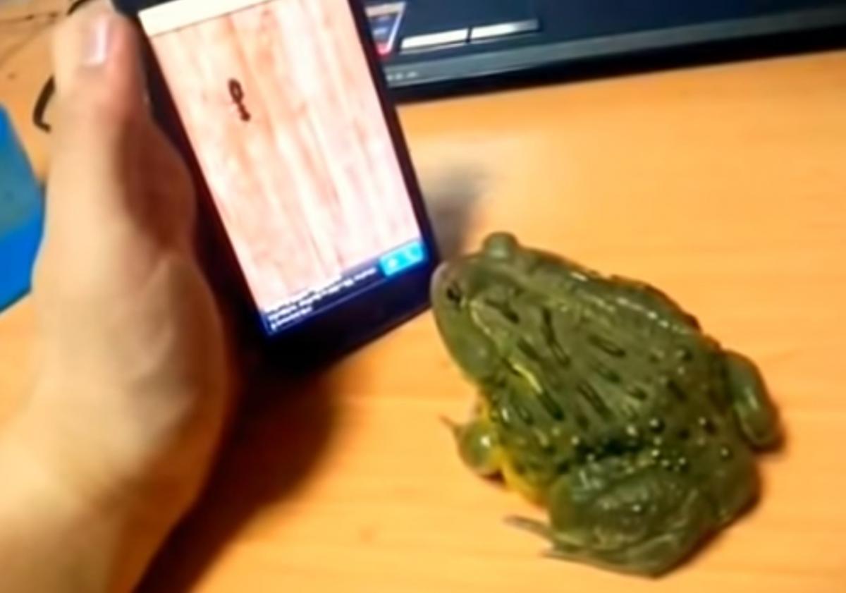 Оставшись голодной, лягушка укусила палец хозяина / Фото: скриншот