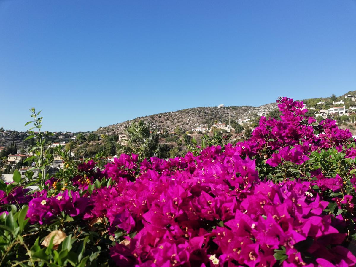 Покупка недвижимости - один из способов получить ВНЖ или гражданство Кипра / Фото Марина Григоренко
