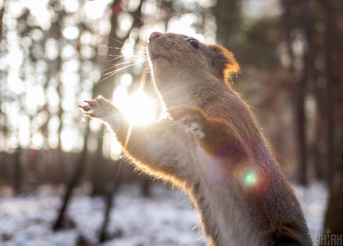 На этой неделе погода порадует солнцем / Фото УНИАН