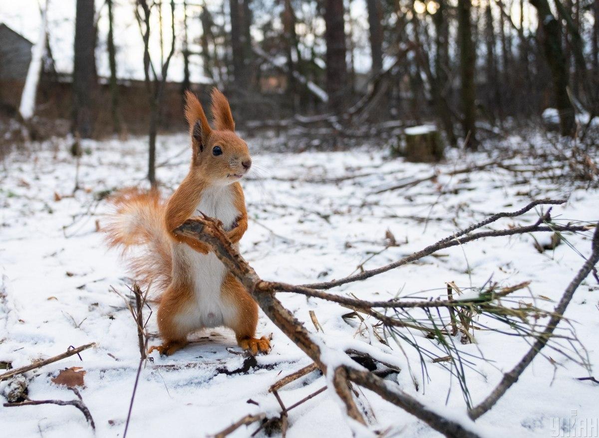 В найближчий час похолодання в Україні не буде / Фото УНІАН