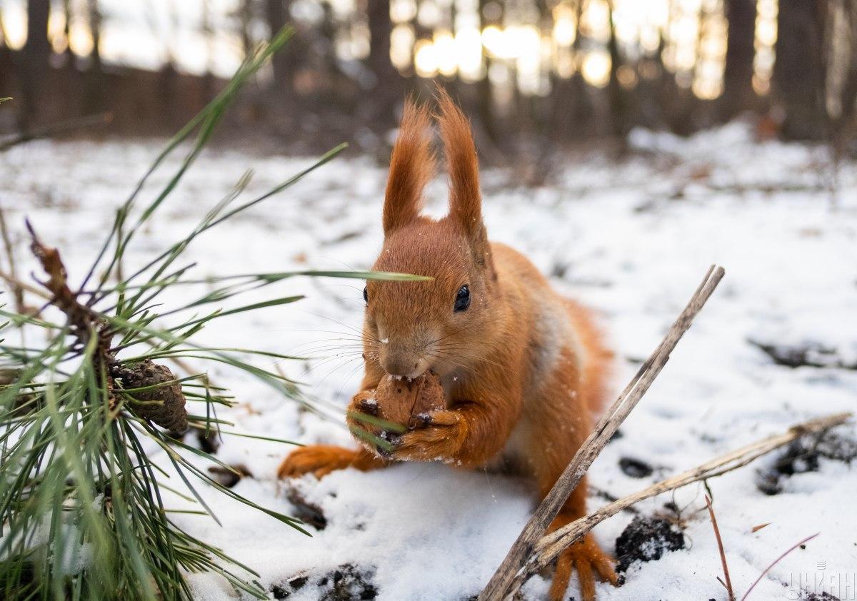 Синоптики прогнозують м'яку зиму / Фото УНІАН