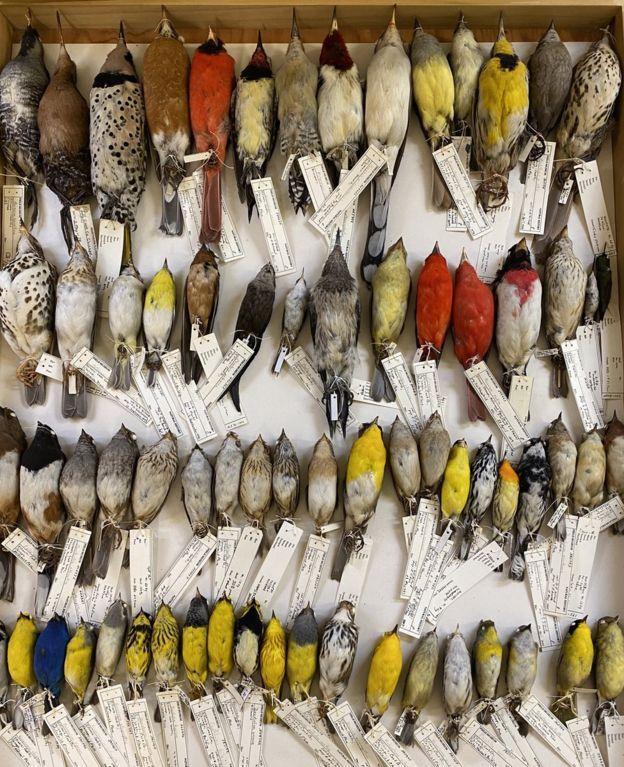 """Уикс рассказывает, что поиск 70 тыс. образцов для исследования был """"подвигом Геракла"""" \ THE FIELD MUSEUM"""