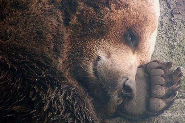 Тваринам світили в очі ліхтариком, намагалися їх розбудити феєрверками, але марно / nexplorer.ru