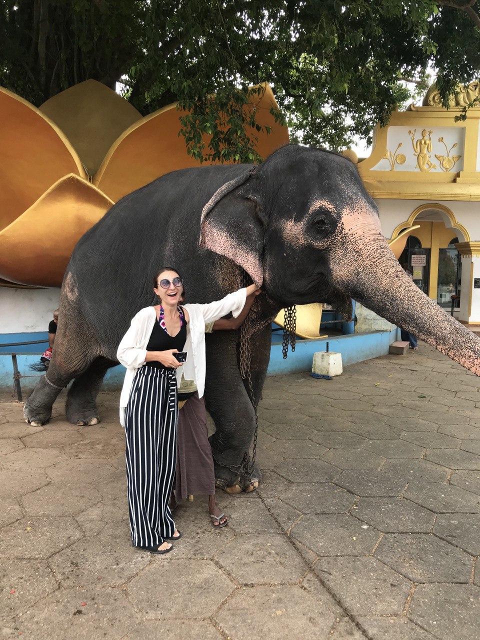 Ощущение детского восторга: слон ест прямо с рук / Фото Вероника Кордон