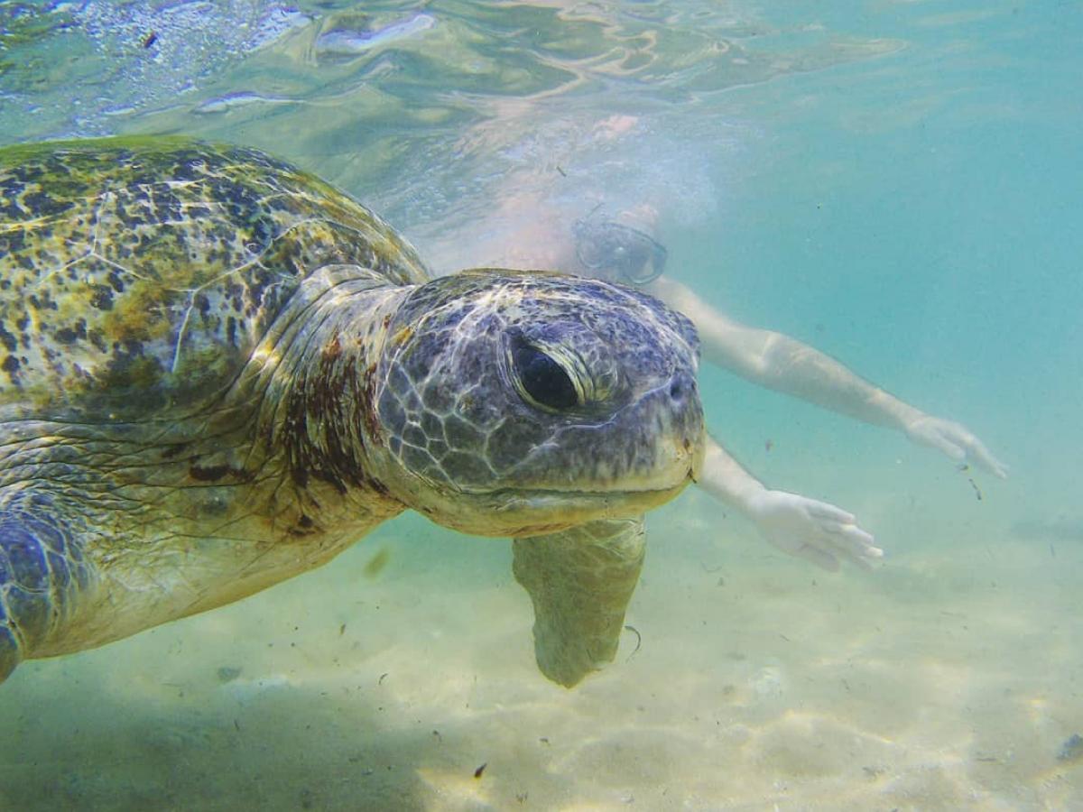 Плавание с черепахами – это необыкновенные эмоции / Фото Вероника Кордон
