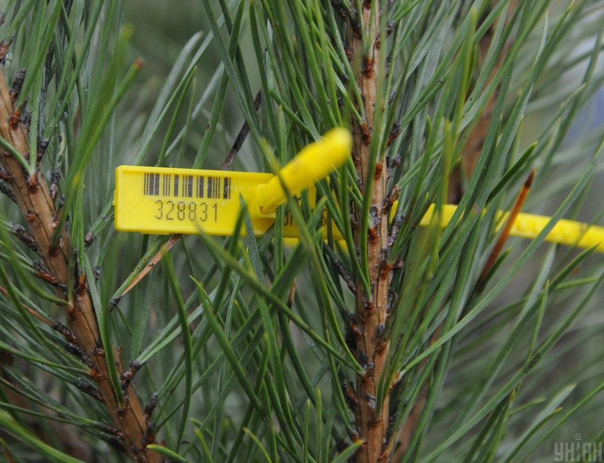 Натуральные елки должны иметь специальные чипы / фото УНИАН