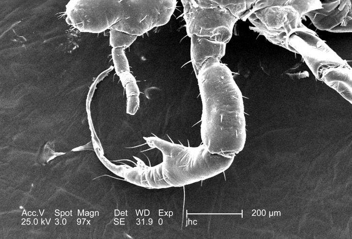 Знайденим личинкам комах 100 мільйонів років / Фото: pixnio.com
