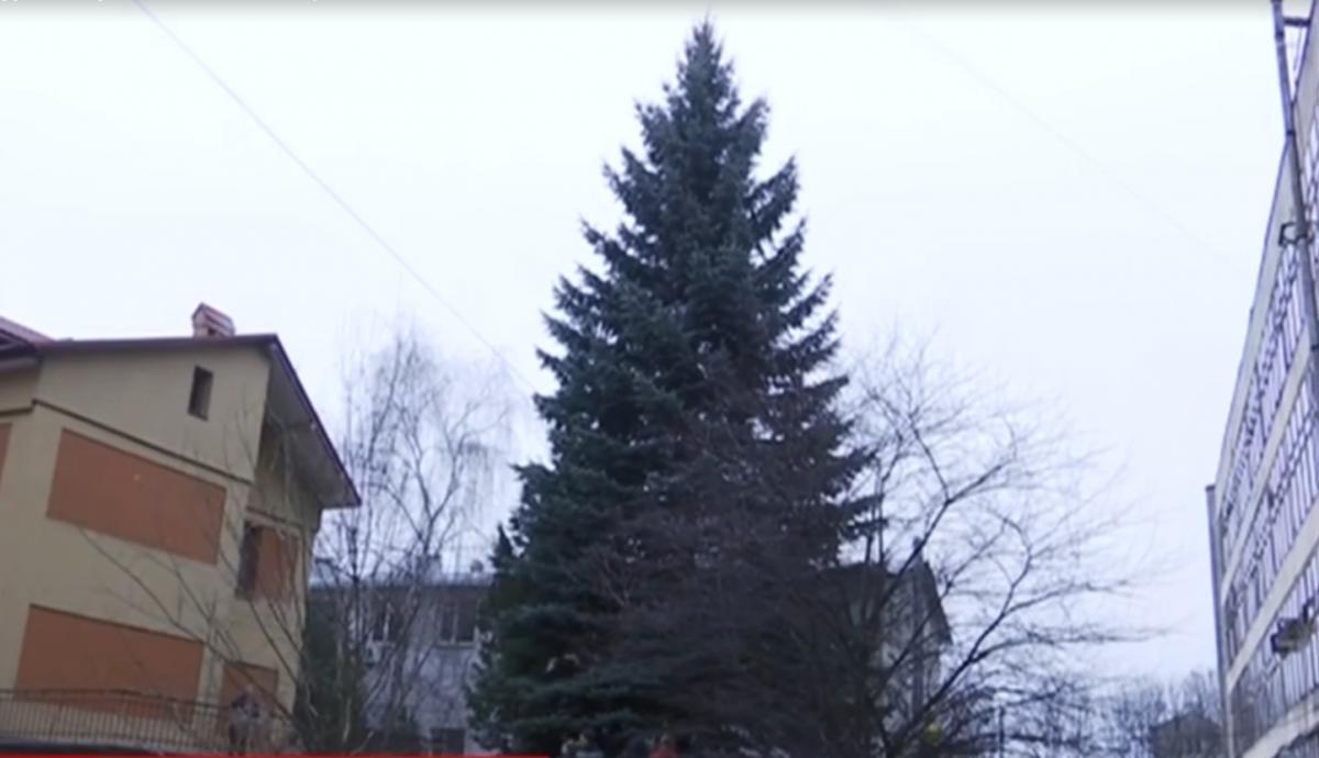 В центре города Льва будет стоять 50-метровая елка / скриншот