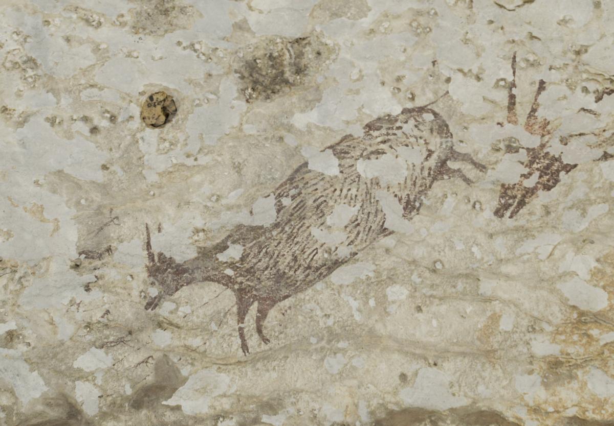 Рисунку, найденному в Индонезии, 44 тысячи лет / Griffith University
