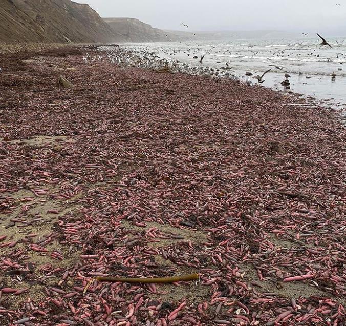 Ученые считают, что черви существуют уже 300 млнлет \ baynaturemagazine