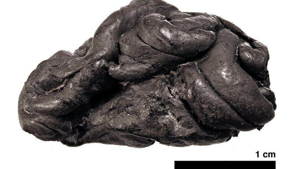 ДНК женщины из каменной эры нашли в куске смолы / THEIS JENSEN