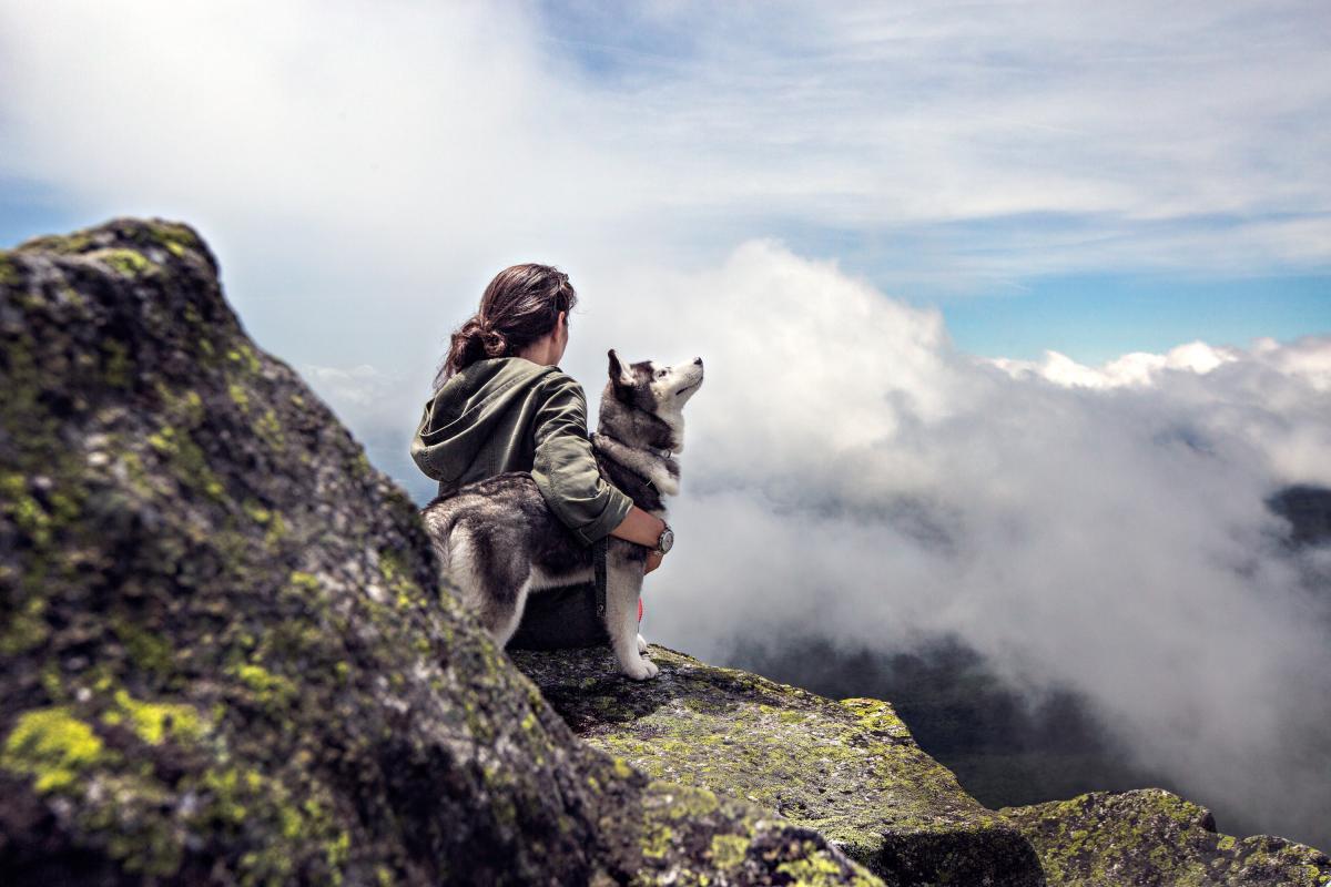 Путешествовать с собакой не так сложно, как кажется на первый взгляд / Фото pexels.com
