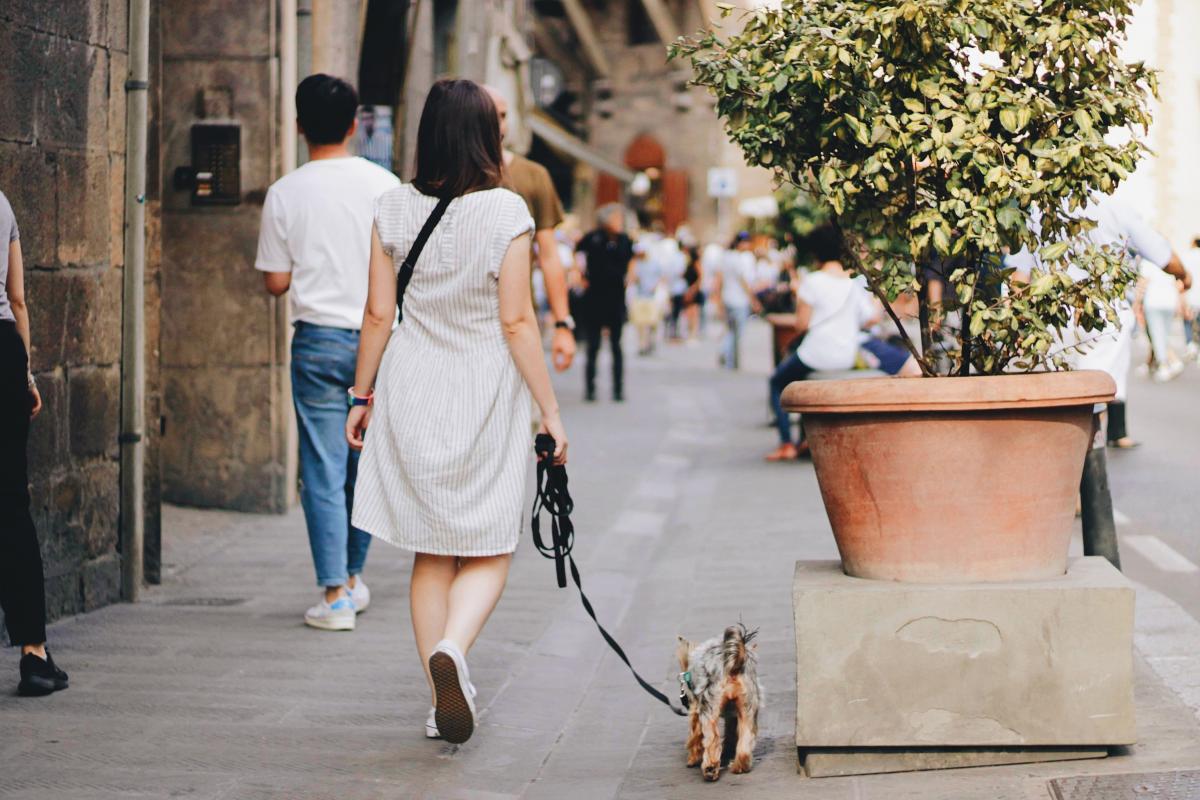 Занимайтесь воспитанием собаки, чтобы путешествовать с ней было комфортно / Фото Елена Браун