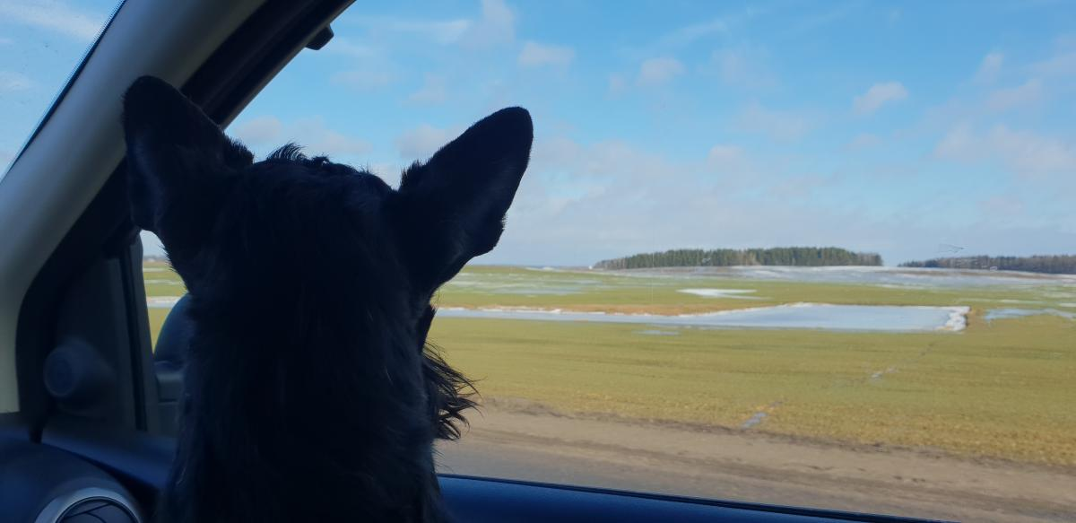 Туна любит путешествовать на машине / Фото Жанна