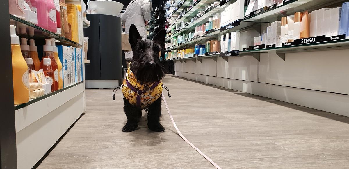 Не забудьте взять в поездку салфетки и пакетики для уборки за собакой / Фото Жанна