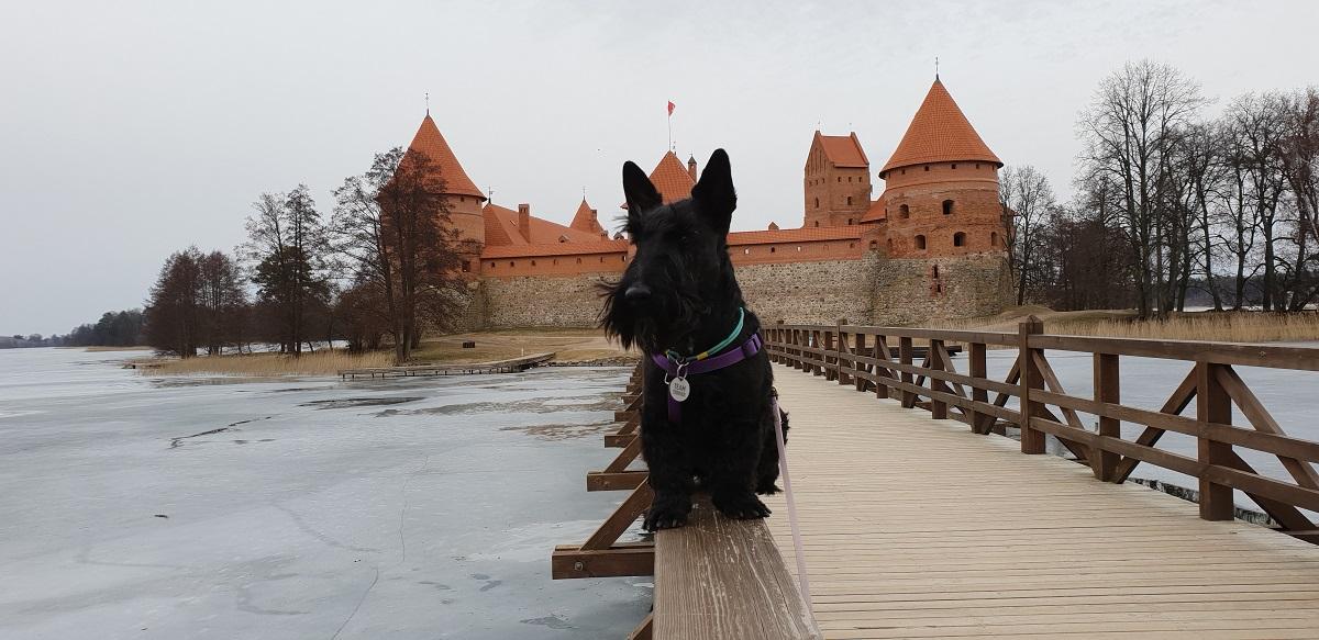 Большинству собак нравится путешествовать / Фото Жанна
