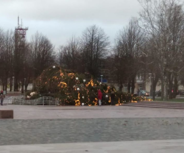 Ствол елки переломился у основания / eurointegration.com.ua