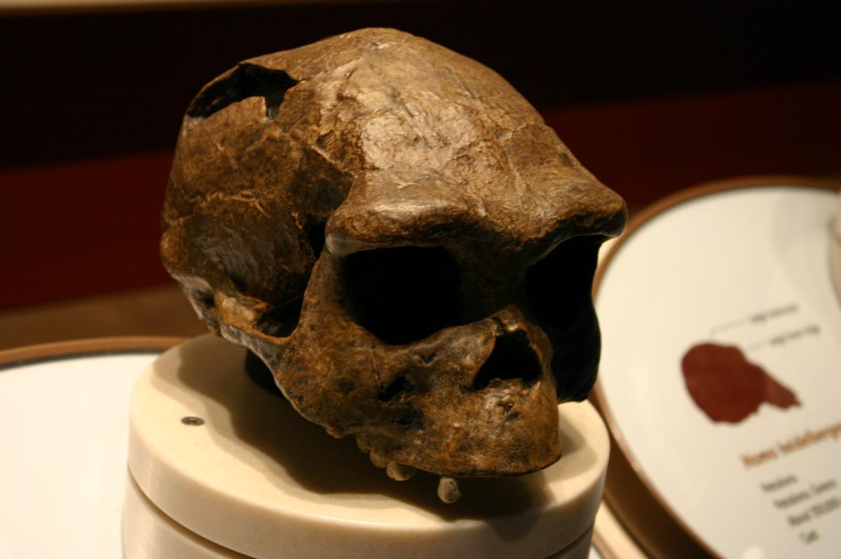 Ученые выяснили, где умерли последние Homo erectus / Flickr/Ryan Somma