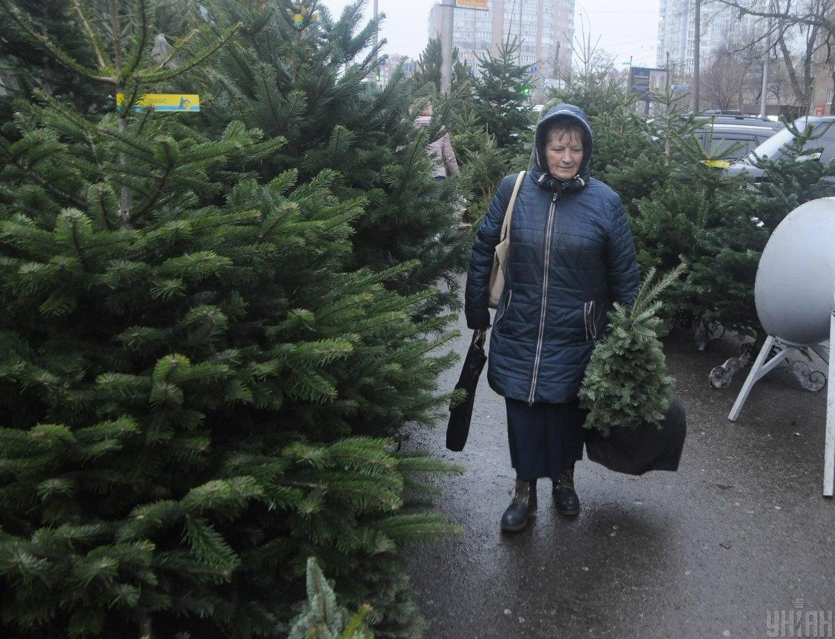 УГКЦ предлагает украинцам елки в аренду / фото УНИАН