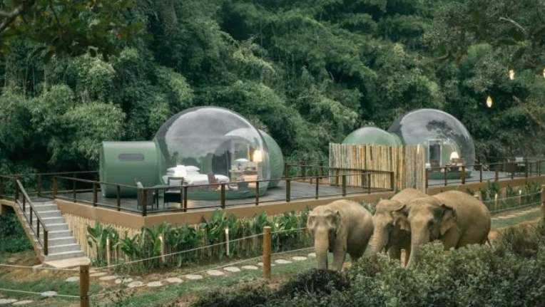 Anantara Golden Triangle Elephant Camp & Resort \ Anantara