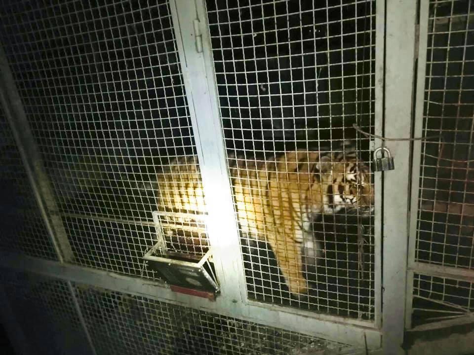 Вирішується питання щодо влаштування тварин до спецзакладу / фото: прес-служба поліції