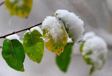В альпийских районах Швейцарии и Австрии неожиданно рано выпал снег