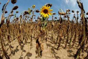 Пустыни, торнадо и новые вирусы: экологи рассказали, какой будет Украина до 2100 года