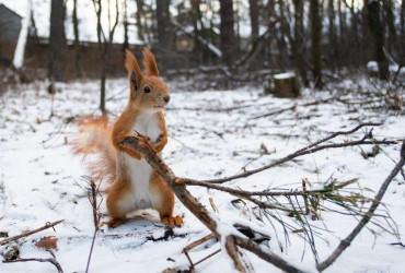 Синоптики рассказали, когда в Украину придет зимняя погода