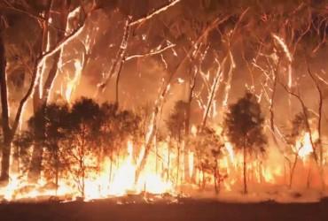 Лесные пожары в Австралии охватили новые города