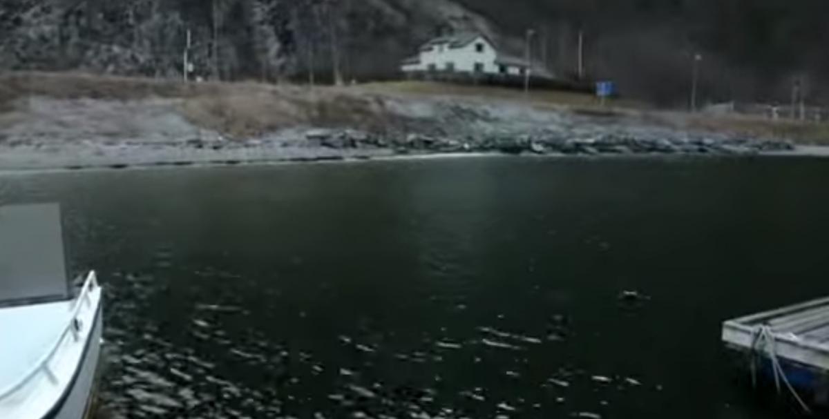 В Норвегии установилась рекордно теплая погода / youtube.com/euronews